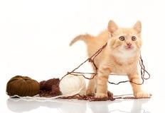 Chaton rouge jouant des boucles de fil Photographie stock