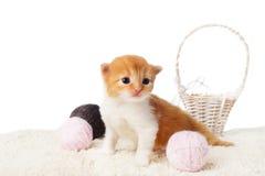 Chaton rouge mignon avec les boules de laine de fil d'isolement Photos stock
