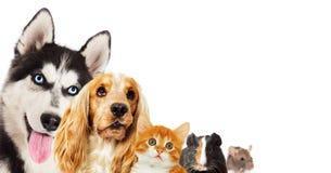 Chaton roux et chien enroué de chiot et d'épagneul Photos stock