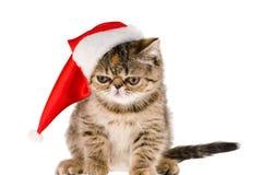 Chaton Santa Photos libres de droits