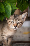 Chaton sauvage Photos libres de droits