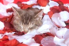 Chaton se reposant dans des pétales roses Photographie stock