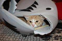 chaton se reposant dans sa maison photo libre de droits