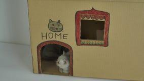 Chaton se reposant devant la porte, maison de chats de carton clips vidéos