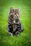 Chaton se reposant sur l'herbe fraîche et regardant loin Image stock