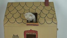 Chaton se reposant sur le balcon, maison de chats de carton clips vidéos