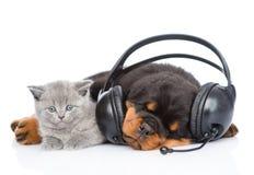Chaton se trouvant avec le chiot de Bordeaux de sommeil écoutant la musique dessus Photo stock