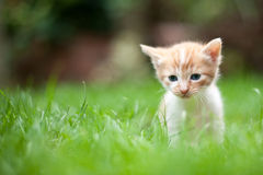 Chaton seul triste Photo stock