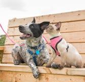 Chaton siamois et Texas Heeler sur un banc de parc en bois Photos libres de droits