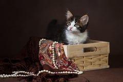 Chaton sibérien pelucheux mignon dans un panier sur le fond brun Portrait Photo stock