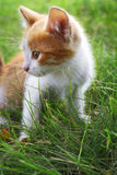 Chaton sur l'herbe verte Photo stock