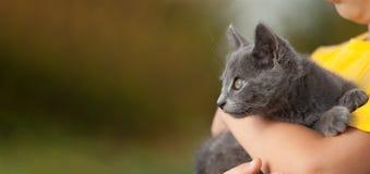 Chaton sur le bras du garçon dehors, enfant énorme son animal familier d'amour Photo libre de droits