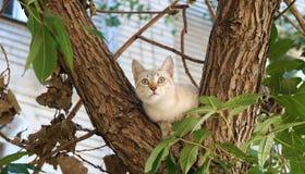 Chaton sur un arbre ! photographie stock