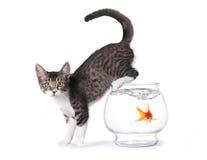 Chaton sur un Fishbowl photo libre de droits