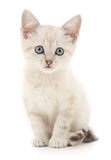 Chaton sur un fond blanc Photos stock