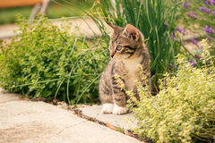 Chaton tigré avec les pattes blanches sur la tuile en béton grise photo stock