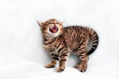 Chaton tigré effrayé photographie stock libre de droits