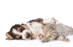 Chaton tigré se trouvant avec le chiot de chien de basset de sommeil Sur Image libre de droits