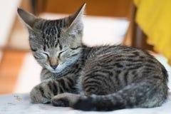 Chaton tigré se trouvant sur une chaise image libre de droits