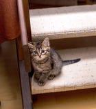 Chaton tigré seul reposant sur des escaliers et recherchant pitoyablement Foyer sélectif photos libres de droits