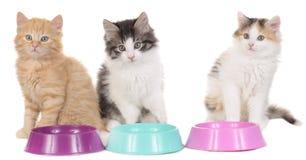 Chaton trois avec des bols de nourriture Photo stock