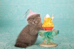 Chaton utilisant le chapeau rose d'anniversaire se tenant à côté du petit gâteau jaune sur le fond bleu-clair Photos stock