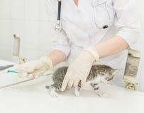 Chaton vaccinique injecté par vétérinaire photos libres de droits