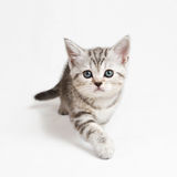 Chaton venez Photo stock