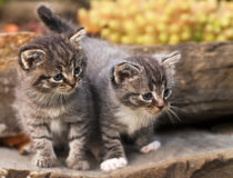 Chatons Images stock