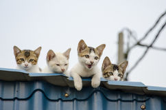 Chatons Photographie stock