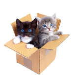 Chatons Photo stock
