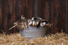 Chatons adorables mignons dans un arrangement de grange avec le foin Images stock