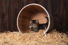 Chatons adorables mignons dans un arrangement de grange avec le foin Photo stock