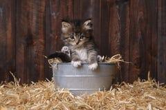 Chatons adorables mignons dans un arrangement de grange avec le foin Images libres de droits
