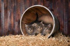 Chatons adorables mignons dans un arrangement de grange avec le foin Photographie stock libre de droits