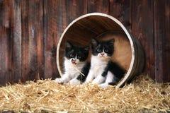 Chatons adorables mignons dans un arrangement de grange avec le foin Image stock