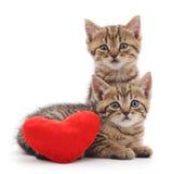 Chatons avec le coeur de jouet Image libre de droits