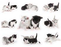 chatons beaux Photographie stock libre de droits