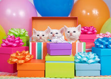 Chatons d'anniversaire Photo stock
