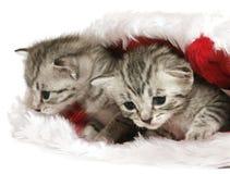 Chatons dans le chapeau de Noël Photos libres de droits