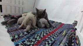 Chatons de alimentation de chat de maman clips vidéos