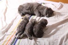 Chatons de bébé, premiers jours de la vie Photos stock