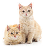 Chatons de Brown Image stock