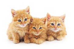 Chatons de Brown Photographie stock libre de droits