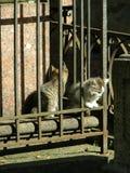 Chatons de cimetière Photographie stock libre de droits