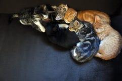 Chatons de sommeil Image libre de droits