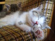 Chatons de sommeil Images libres de droits