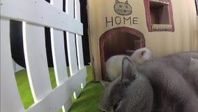 Chatons et chat de maman dans une maison de carton, vue extérieure banque de vidéos