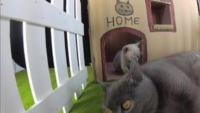 Chatons et chat de maman dans une maison de carton, vue extérieure clips vidéos