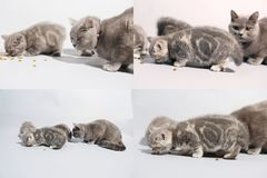 Chatons et chat de maman mangeant de l'aliment pour animaux familiers du plancher, multicam, écran de la grille 2x2 Images stock
